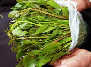 Khat addiction and abuse